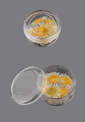 www.snowfall-beads.com - Dried flowers painted 17mm (20 pcs.) in synthetic box